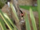 Ladybird in Fort Amherst