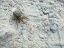 Spider at Fort Amherst
