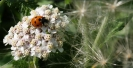 Ladybird on The Great Lines