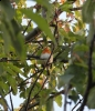 A Robin in the Fort Amherst Parklands